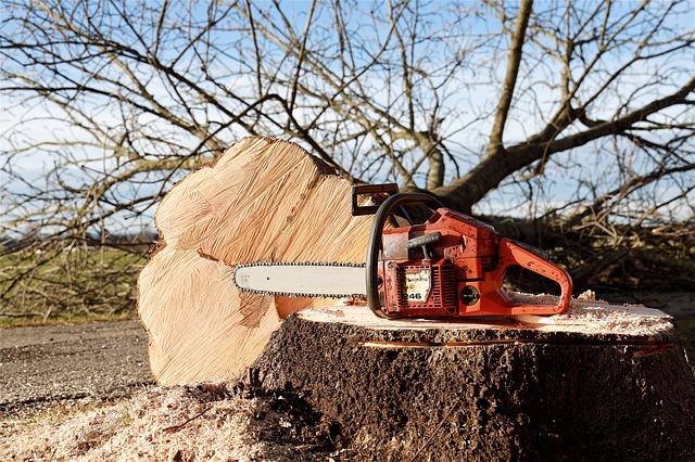 Tree-cutting-chainsaw
