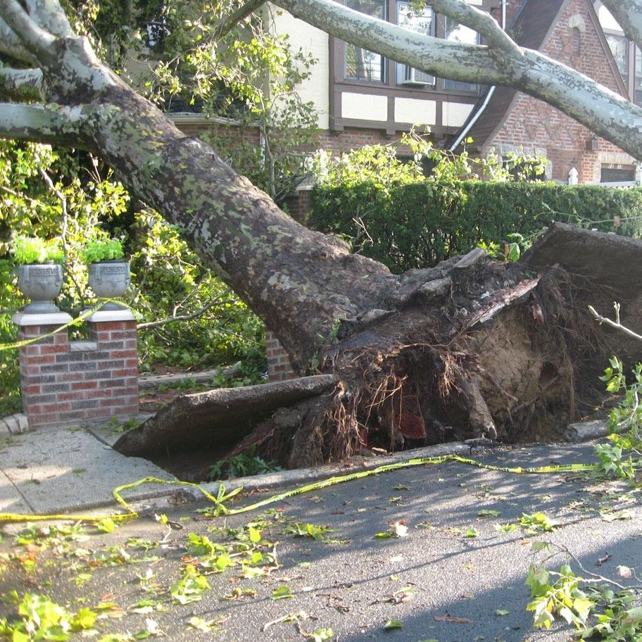 McKinney-tree-removal