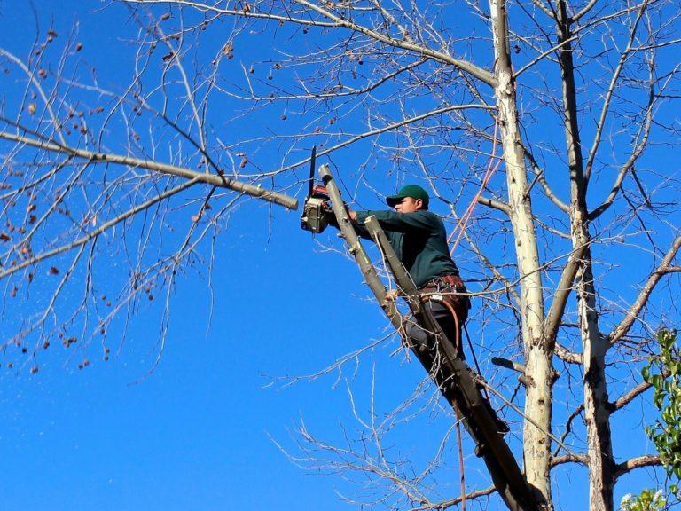 McKinney-tree-trimming